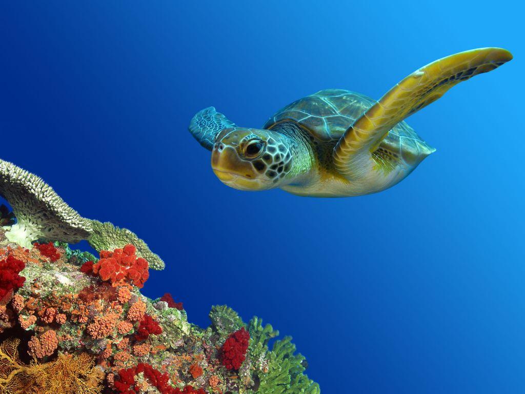 Prenez soin de votre tortue d'eau