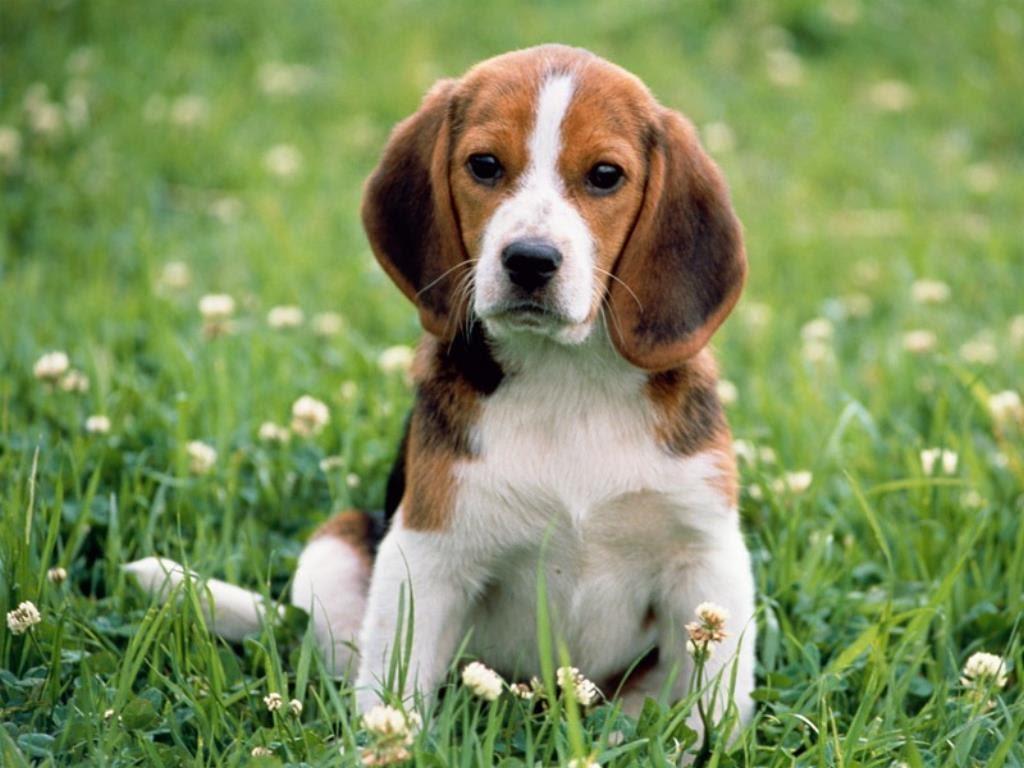 Trouver le nom de votre chien : comment faire pour trouver un prénom original ?