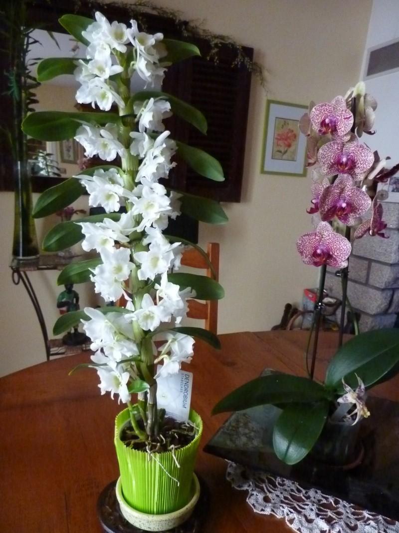 Comment couper les orchid es - Comment couper orchidee apres floraison ...