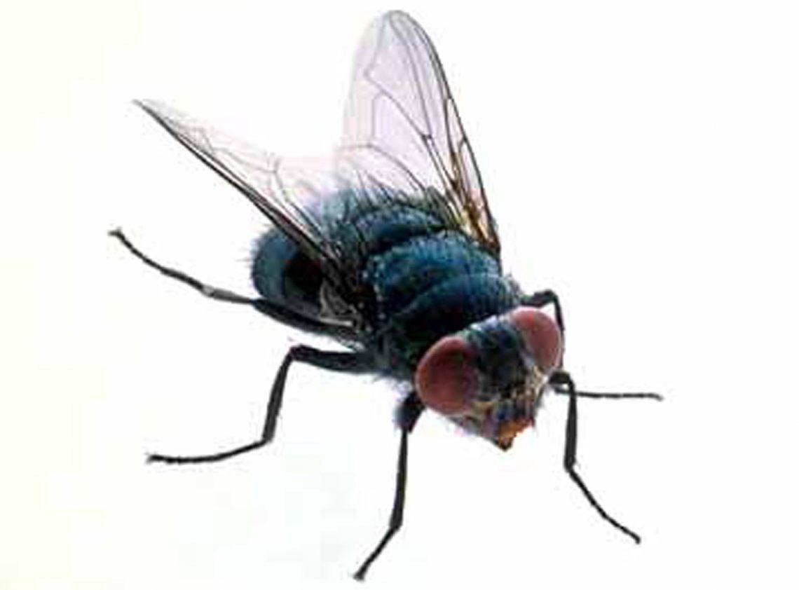 Comment tuer les mouches - Comment tuer une mouche ...